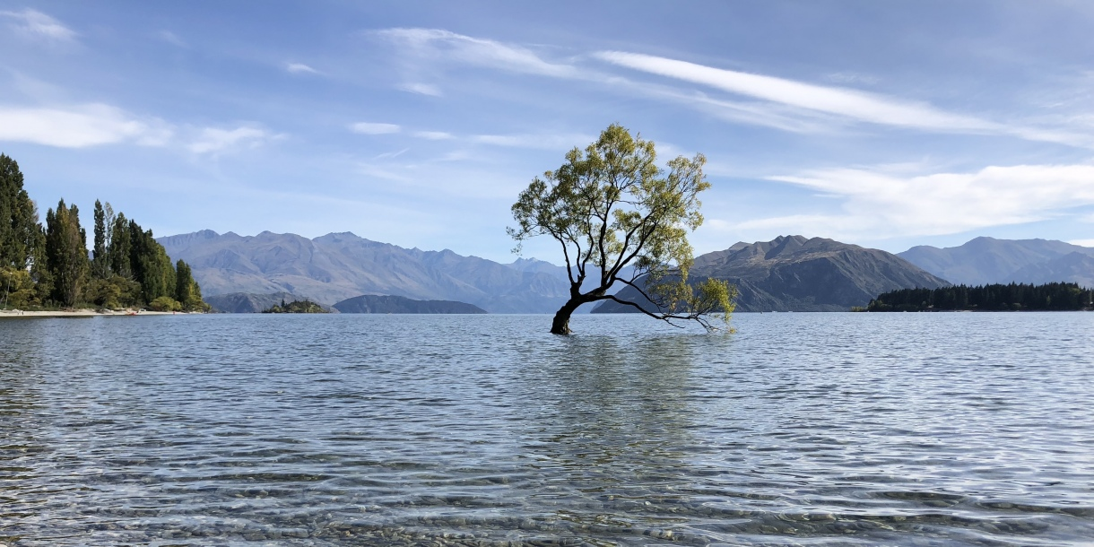 Tree standing in the middle of a lake in New Zealand