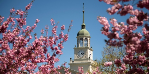 Bertrand Library clock tower surrounded by cherry blossoms
