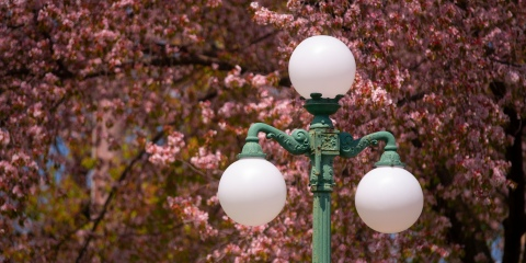 Lamppost in downtown Lewisburg with cherry blossoms.
