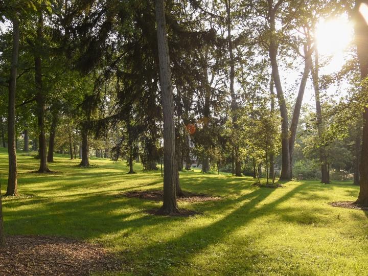 The sun shining through The Grove in summer